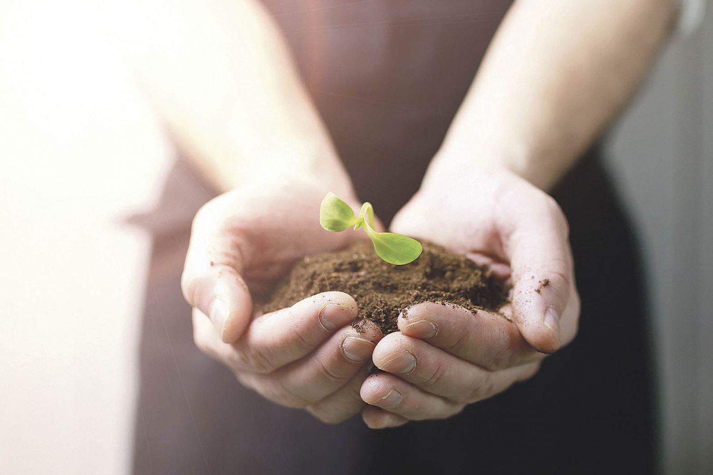Ein Mensch hält einen Pflanzenspross in seinen Händen. Thema: Landwirtschaftliche Versicherungen